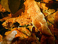 Aquatic Biofilm subaquatiqueForestFreshwater2015PrintempsLamiotF 05.JPG