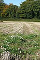 Arable land at Checkendon - geograph.org.uk - 1005609.jpg