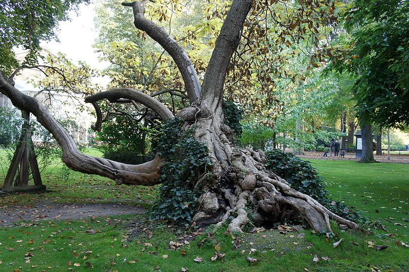 for Arbres jardin du luxembourg