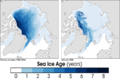 Arctic Sea Ice Age2008.png