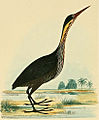 Ardea Flavicollis Yellow necked black heron Birds of India.jpg