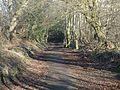 Auchincruive Waggonway cutting, Annbabk, South Ayrshire, Scotland.jpg