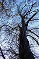 Autumn Leaves and Trees 01-11-2007 15-21-57 (1953773193).jpg