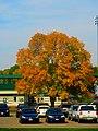 Autumn in Madison - panoramio (1).jpg