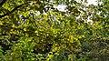 Autumn season in Butanic Garden فصل پاییز در باغ بوتانیکال تفلیس 24.jpg