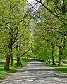 Avenue, Roundhay Park (3510277547).jpg
