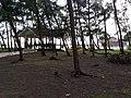 Azhikode beach - panoramio (2).jpg