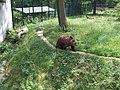 Bär auf dem Hexentanzplatz - panoramio.jpg