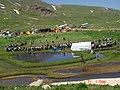 BERCELAN FESTIVALS 01.06.2009 - panoramio.jpg