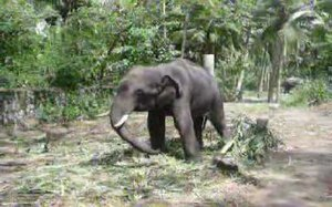 File:Baby elephant dance.ogv