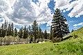 Backcountry views from along Hellroaring Creek (3) (41717807374).jpg