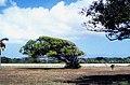 Bahamas 1989 (753) Long Island (26169490351).jpg