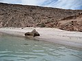 Baja California Sur (21032459213).jpg