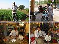 Bakharla's varied economy.jpg