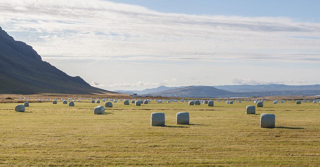 Archivobalas De Paja, Akranes, Vesturland, Islandia, 2014