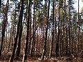 Baltiyskiy rayon, Konigsberg, Kaliningradskaya oblast', Russia - panoramio (52).jpg