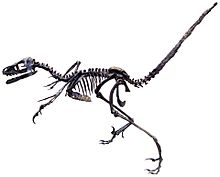 Bambiraptor 4.1. White Background.jpg