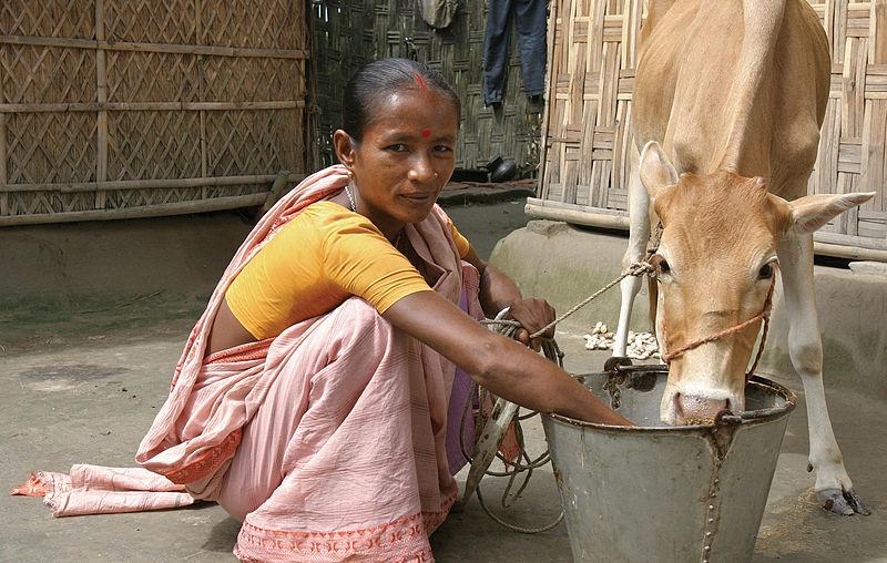File:Bangladesh microfinance (10676772556).jpg