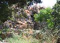 Banias-2-353.jpg