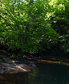 Baptise-hole-wv - West Virginia - ForestWander.jpg