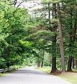 Barnett Township, PA, USA - panoramio.jpg
