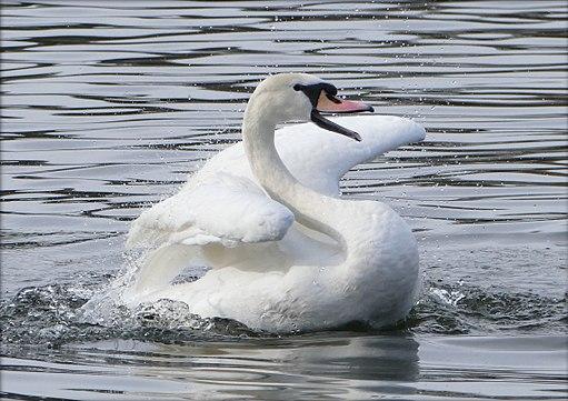 Bathing Fun (16642456625)