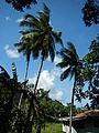 Bauan,Mabini,Batangasjf8564 03.JPG