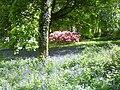 Beautiful Bluebells - geograph.org.uk - 1290400.jpg