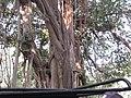 Beautiful Tree in the jungle.jpg