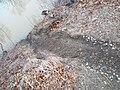 Beaver slide Miller Woods.jpg