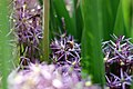 Bee At Work Img 9371 (156039423).jpeg