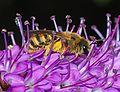 Bee May 2008-5.jpg
