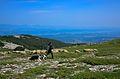 Berger de la montagne de Lure.jpg