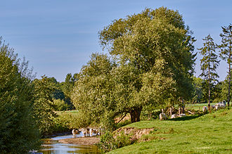 Berkel - Image: Berkelaue in Tungerloh, Gescher (04258)