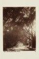 Bild från familjen von Hallwyls resa genom Algeriet och Tunisien, 1889-1890 - Hallwylska museet - 91861.tif