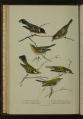 Bird-Lore-6-5 0184-scan.png