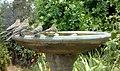 Bird Bath (9130346945).jpg