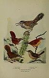 Bird lore (1916) (14568818578).jpg