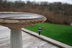 Bird bath - A shallow concrete bird bath