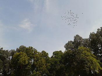 Birds-Andhra Pradesh-India.jpg