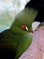 Birds Garden of Isfahan (17).jpg