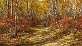 Birds Hill Provincial Park, Manitoba (481673) (24614218682).jpg