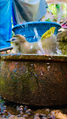 Birds bathing 6.png
