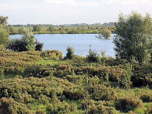 "Utrecht (province) - A site in Utrecht's nature reserve, ""Blauwe kamer"" near Rhenen"