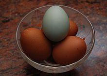Image Result Foren Egg Creation