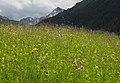 Blumenwiese im Wattental.JPG