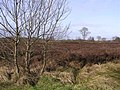 Bogland, Cloghfin - geograph.org.uk - 1200339.jpg