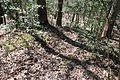 Boones Mounds, Arkansas DSC 0877 (8564730449).jpg