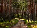 Bory Niemodlińskie - droga leśna.jpg