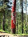 Bosque de Oma (24).JPG